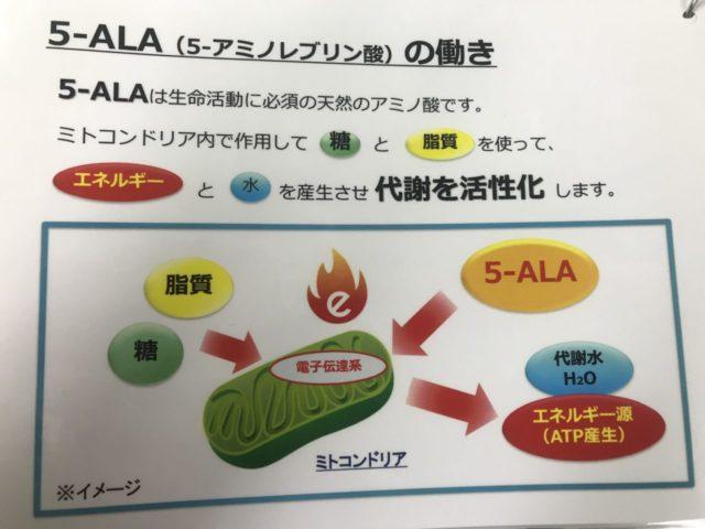 5-ALAの働き